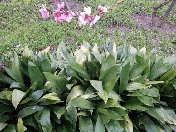 plantas de exterior para principiantes