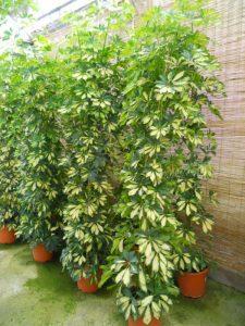 plantas para principiantes