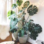 Plantas para refrescar tu hogar este verano
